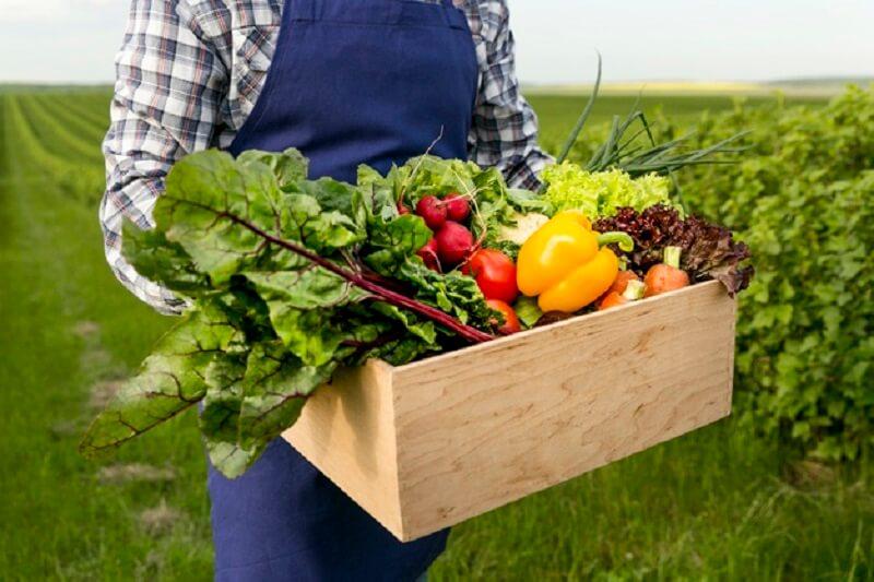 مهندس امیر مسعودی از چگونگی درآمد رشته مهندسی کشاورزی میگوید قسمت (۱)